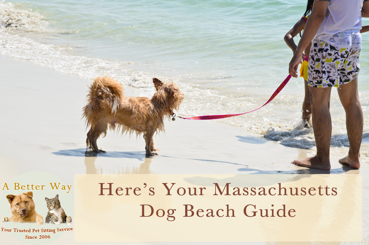 The Best Dog Beaches In Machusetts Plus Beach Safety Tips A Better Way Pet Sitting Service House Walking And Taxi