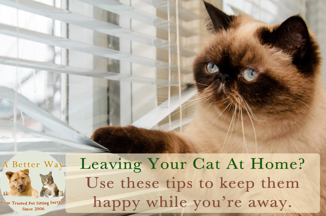 Use these tips for leaving your cat at home while you're away.