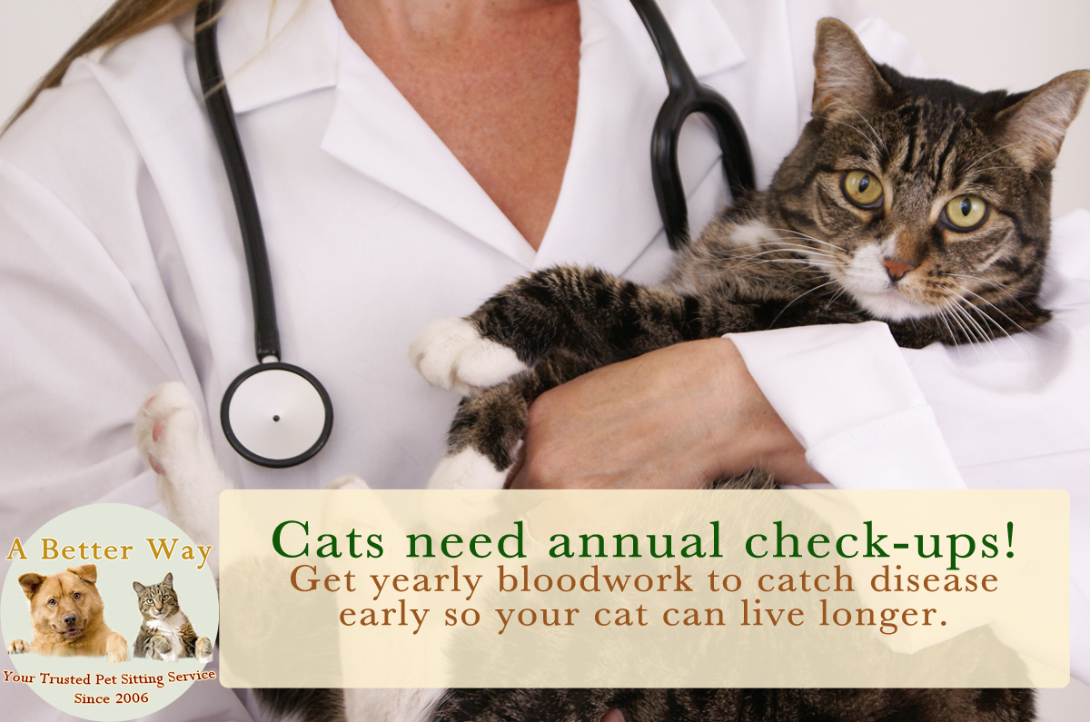 When Should Your Cat Go To The Vet? #Cat2VetDay