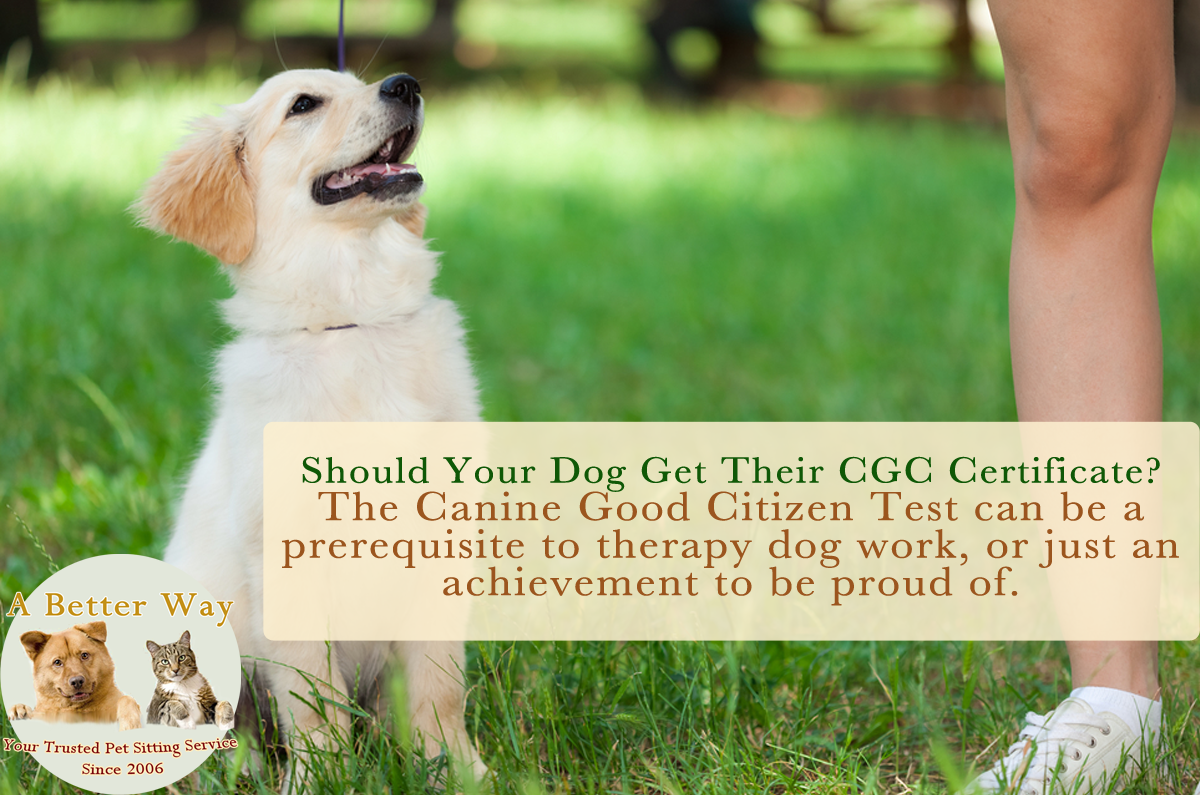 Should your dog take the #CanineGoodCitizen Test?