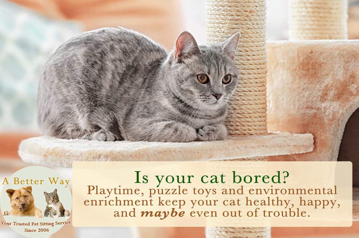 Mental stimulation keeps your cat healthy, happy and maybe even out of trouble.